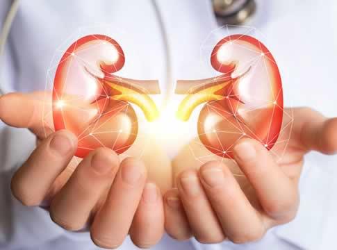 Böbrekler insan vücudundaki hangi sistemi oluşturan organlardandır