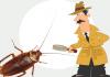 Hamam Böceği Yuvası Nasıl Bulunur