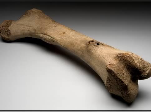Dünyaya geldiğinde vücudunda yaklaşık üç yüz elli kemik var. Büyüme sürecini tamamladığında ise sadece iki yüzün üzerinde kemiğin olacak.