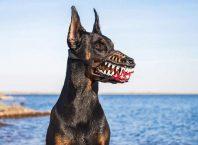 Korkunç Köpek Ağızlığı